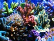 Кораллы натуральные морские