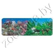 Фон для аквариума Кораллы(синий)/ Растительный с белым камнем (синий) 50х15/2ст  9001/9003