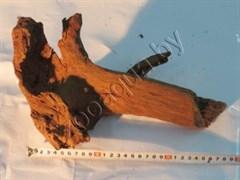 Корень мангрового дерева 15-30 см