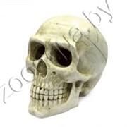 "ArtUniq Large Skull - Декоративная композиция ""Большой череп"" 20x12,7x15,8 см"