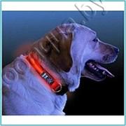 Светящийся ошейник для собак (3 режима)