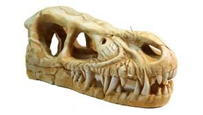 Динозавры №1004