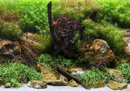 Фон Водный сад/Яркие камни 60см