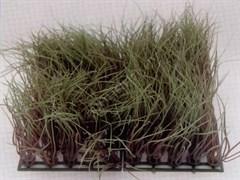 Растение пластиковое Коврик 12,5х25см, зеленое