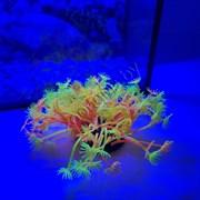 Коралл силиконовый желто-красный 7.5х7.5х10см (SH189RY)