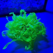 Коралл силиконовый желтый 4.5х4.5х11см (SH132MY)