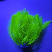 Коралл силиконовый желтый 4х4х12см (SH131SY)