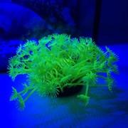 Коралл силиконовый желтый 7.5х7.5х10см (SH189Y)