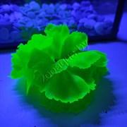 Коралл силиконовый зеленый 14х11х9см (SH205SG)