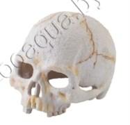 Убежище-декор Череп примата 11х14х9.5 см