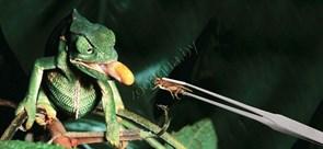 Пинцет EXO TERRA для кормления рептилий
