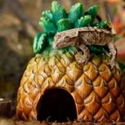 Укрытие ананас Exo Terra Pineapple Hide 13х13х16 см.