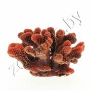 Коралл пластиковый (мягкий) красный 24x21x13,5см