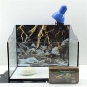 Черепашатник Aqua Wave на 47 л. готовый комплект 9 для сухопутной черепахирептилии