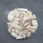 Shell 002 Набор морских раковин в сеточке 200 гр ФРУКТЫ МОРЯ МИКС