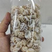 Shell 006 Набор морских раковин в банке 800мл300-400гр , 2-3 см