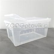 Террариум для пауков и улиток пластиковый Big feeding box 32х22х15см