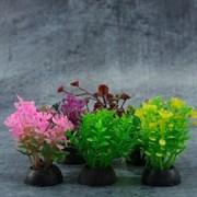 Набор разноцветных растений Laguna 50 мм, 6 шт