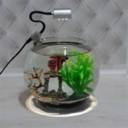 Аквариум Aqua круглый на 5 л. готовый комплект c рыбкой петушок и декором