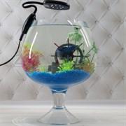 Аквариум Aqua бокал на 5 л. готовый комплект c рыбкой петушок и декором