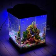 Аквариум Куб Aqua Glo на 20л. день/ночь с рыбками данио GloFish Reff