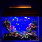 Аквариум Aqua Glo прямоугольник на 10л. день/ночь с рыбками тернеция GloFish