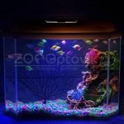 Аквариум Aqua Glo панорама на 30л. день/ночь с рыбками тернеция GloFish Reff